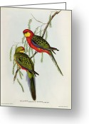 Two By Two Greeting Cards - Platycercus Icterotis Greeting Card by John Gould