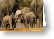 Elephant Pyrography Greeting Cards - Play 5 Greeting Card by Alistair Lyne