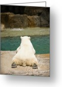 Laying Greeting Cards - Playful Polar Bear Greeting Card by Adam Romanowicz