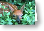 Whitetail Deer Greeting Cards - Playing Peekaboo Greeting Card by Sandra Bronstein