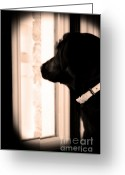 Black Lab Puppy Greeting Cards - Please Come Home Greeting Card by Cathy  Beharriell