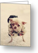 Chihuahua Greeting Cards - Please Meet Zoe Greeting Card by Laurie Search