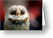 Owl Greeting Cards - Please  Greeting Card by Photodream Art
