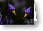Bittersweet Digital Art Greeting Cards - Pleasures Of Purple Greeting Card by The Stone Age