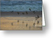 Seabirds Greeting Cards - Plovers at play on a stormy morning Greeting Card by Blair Stuart