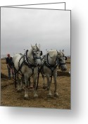 Plowing Greeting Cards - Plowing Proud Greeting Card by Peggy  McDonald