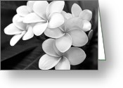 Black And White Floral Greeting Cards - Plumeria - Black and White Greeting Card by Kerri Ligatich