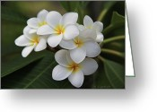 Tropical Greeting Cards - Plumeria - Golden Hearts Greeting Card by Kerri Ligatich