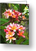 Fragrant Flowers Greeting Cards - Plumeria - Pink and Orange Greeting Card by Kerri Ligatich