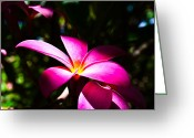 Illustrative Greeting Cards - Plumeria Greeting Card by Daniel K