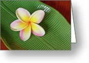 Pacific Islands Greeting Cards - Plumeria Flower On Ceramic Leaf Greeting Card by Laszlo Podor Photography