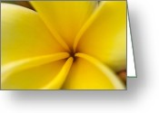 Florida Flowers Greeting Cards - Plumeria Princess Greeting Card by Rich Franco