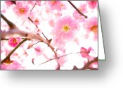 Pink Flower Branch Greeting Cards - Plum(ume) Blossoms Greeting Card by Marser