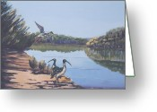Murray Mcleod Greeting Cards - Point Clare Reflections 1 Greeting Card by Murray McLeod