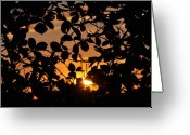 Gloaming Greeting Cards - Pointed Shadow Greeting Card by Brittany H