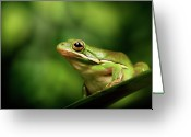 Frog Greeting Cards - Poised Greeting Card by MarkBridger
