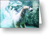 Polar Bear Greeting Cards - Polar Bear Greeting Card by Japanese amateur photog