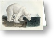Ursus Maritimus Greeting Cards - Polar Bear Greeting Card by John James Audubon