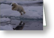 Number Circle Greeting Cards - Polar Bear Leaping Over A Gap In Arctic Greeting Card by Norbert Rosing