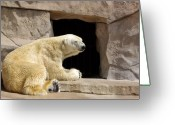 Polar Bear Greeting Cards - Polar Bear Prayers Greeting Card by Linda Mishler