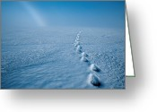Admiralty Greeting Cards - Polar Bear Tracks Melt Through The Snow Greeting Card by Paul Nicklen