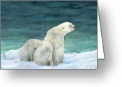 Polar Bear Greeting Cards - Polar Bears by The Sea Greeting Card by Nonie Wideman