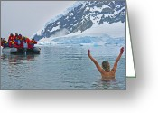 Skinny Dip Greeting Cards - Polar Dip Greeting Card by Tony Beck