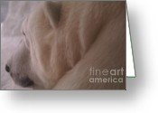 Winter Sleep Greeting Cards - Polar Dream Greeting Card by Linda Knorr Shafer