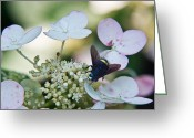 Love Making Greeting Cards - Pollen and Nectar Feeding Fly 9 Greeting Card by Douglas Barnett