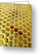 Hexagons Greeting Cards - Pollen In Wax Honeycomb Cells Greeting Card by Cordelia Molloy