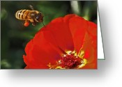 Yellow Greeting Cards - Pollination Greeting Card by Rona Black