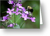 Dames Greeting Cards - Pollinator in Action Greeting Card by Teresa Mucha