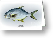 Game Drawings Greeting Cards - Pompano Greeting Card by Ralph Martens