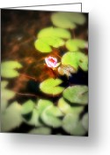 Lilly Pad Greeting Cards - Pond Flower Greeting Card by Perry Webster