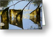 Adrienne Petterson Greeting Cards - Pond Hanging Greeting Card by Adrienne Petterson