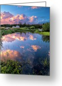 Tuolumne Greeting Cards - Pond Greeting Card by Jean Day Landscape Photography