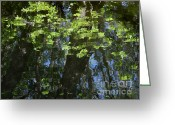 Janeen Wassink Searles Greeting Cards - Pond Reflection 1 Greeting Card by Janeen Wassink Searles