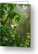 Janeen Wassink Searles Greeting Cards - Pond Reflection 2 Greeting Card by Janeen Wassink Searles