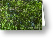 Janeen Wassink Searles Greeting Cards - Pond Reflection 3 Greeting Card by Janeen Wassink Searles