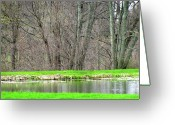 Grow On Trees Greeting Cards - Pond Starts To Grow Greeting Card by Debra     Vatalaro