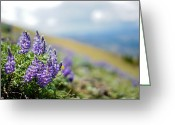 Most Favorite Photo Greeting Cards - Pondering Purple Greeting Card by Justin  Hill