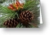 Ponderosa Greeting Cards - Ponderosa Pine Cones Greeting Card by Karon Melillo DeVega
