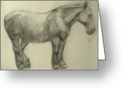 Anatomy Greeting Cards - Pony Greeting Card by Cynthia Harvey