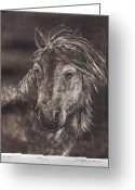 Wild Horse Painting Greeting Cards - Pony II Greeting Card by Barbel Amos