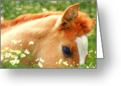 Stallion Greeting Cards - Pony in the Poppies Greeting Card by Tom Mc Nemar