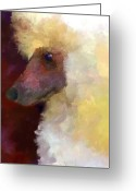 Poodle Greeting Cards - Poodle Portrait Greeting Card by Jai Johnson