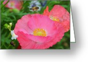Wildflower Photos Greeting Cards - Poppies and Pollinator Greeting Card by Lynn Bauer
