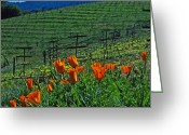 Landscapes Framed Prints Greeting Cards - Poppies and the Vineyard Greeting Card by Kathy Yates