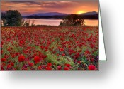 Lanscape Photo Greeting Cards - Poppies Greeting Card by Guido Montanes Castillo