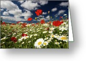 Cumulus Cloud Greeting Cards - Poppies Greeting Card by Lucie Averill